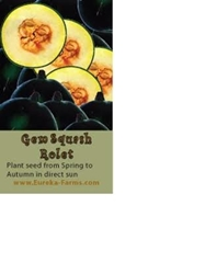 Picture of NO STOCK - Gem squash seeds - 1 pkt